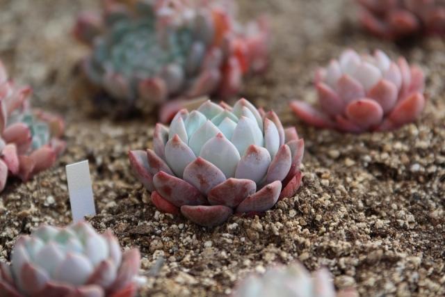 песок для цветов